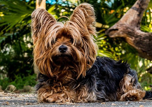 Why I Love An Underdog? by John Gannage, MD