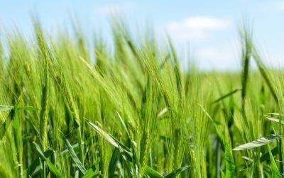 Exasperating: Pesticides and Politics by Dr. John Gannage